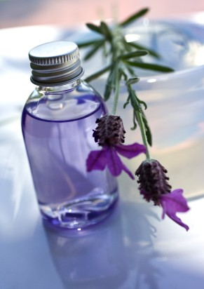 The Benefits & Uses of Lavender